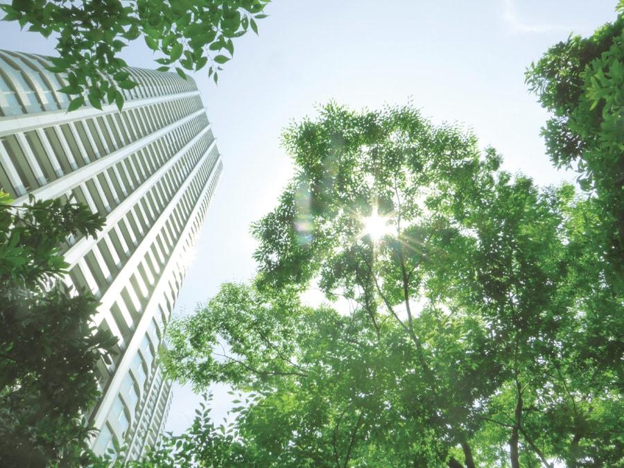 木が生い茂っているビル横