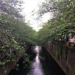 中目黒の西側を通る川の風景