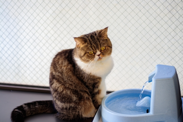 自動給水器と猫