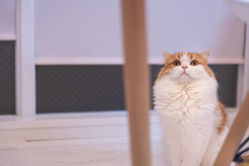 上が気になる猫